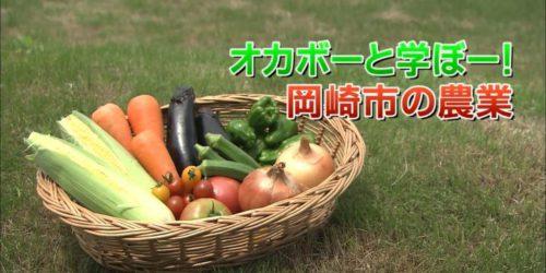 市役所発→情報特急!!「特集」|オカボーと学ぼー!岡崎市の農業|2018年8月1日版