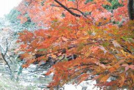 乙川上流の紅葉 11月のラインナップ イメージ写真(撮影:2018年)