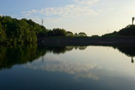 岡崎中央総合公園|恩賜池|7月のラインナップ|イメージ写真